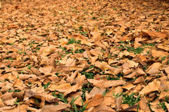 View on the ground covered with fallen dry leaves Stock Photo