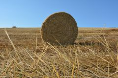 View from the ground on a straw bales with straws. And blue sky Royalty Free Stock Photography