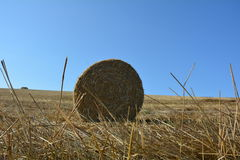 View from the ground on a straw bales with straws. And blue sky Royalty Free Stock Photo