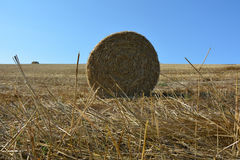 View from the ground on a straw bales with straws. And blue sky Stock Photos