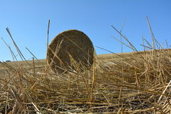 View from the ground on a straw bales. With straws and blue sky royalty free stock image