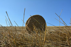 View from the ground on a straw bales with straws. And blue sky stock images