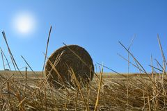 View from the ground on a straw bales with sun. View from the ground on a straw bales with straws , sun and blue sky Stock Image