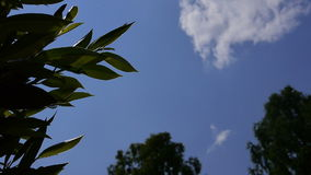 View from the ground up to the blue sky on a sunny day with plants and trees around stock video