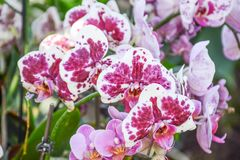 A Beautiful Bunch of Orchids Royalty Free Stock Image