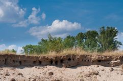 Nests of martin - Riparia riparia, near a river royalty free stock image