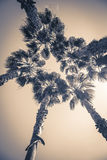 View on group of palms. From bottom up Royalty Free Stock Image