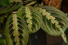 Very Fancy Colorful Leaves. A view of a group  of very colorful leaves with exceptional detail Royalty Free Stock Images