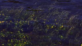 View of grown yellow flowers wave under transparent water of river. Summer day. Nature. Green stems. View of many beautiful grown yellow flowers wave under stock video footage