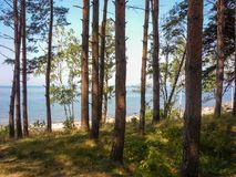 View of the Gulf of Riga through pine forest stock image