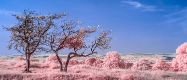 View from Hadrian`s Wall - Infrared stock photos