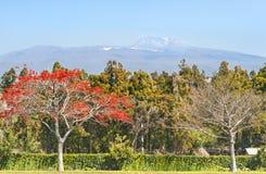 View of Hallasan mountain - symbol of Jeju-do island. Korea Royalty Free Stock Photography