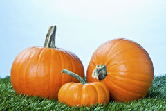 View of halloween pumpkins over grass Stock Photo