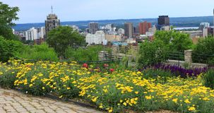 View of Hamilton, Canada, skyline with flowers in front 4K stock footage