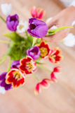 View of hand holing flower Royalty Free Stock Photo