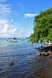 View of hanging tree and see at  Trou D'Eau Douce embarkation point Stock Photos
