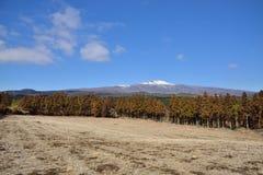 View of Hanla mountain in Jeju Stock Photo
