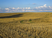 View on the harvest field. Stock Image