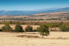 View of harvest field and mountains Stock Photography