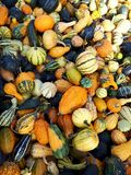 View on harvest of ornamental pumpkins in autumn royalty free stock image