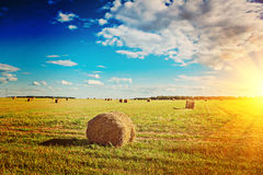 View on harvested field with bales of straw instagram stile Stock Photography