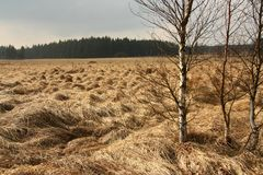 View of the Hautes Fagnes in Belgium, end of winter. Nobody Royalty Free Stock Image