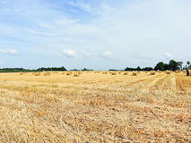 View of haystack rolls on harvested field. In Normandy, France stock photos