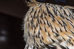 View of the head of an owl from behind royalty free stock photo