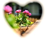 View through the heart on potted flowers. royalty free stock photos