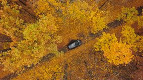 Aerial view on car driving through autumn forest road. Scenic autumn landscape. View from height on car driving through autumn forest road. Scenic autumn stock video