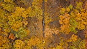 Aerial view on car driving through autumn forest road. Scenic autumn landscape. View from height on car driving through autumn forest road. Scenic autumn stock footage