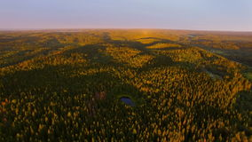 View from a height of forest in sunset time stock video