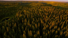 View from a height of forest in sunset time stock video footage