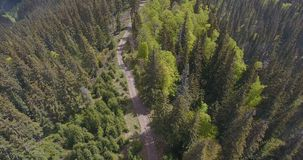 View from the height of a lost forest path in the mountains, aerial shooting. Aerial shooting of a forest path in a coniferous forest among the mountains on a stock video