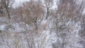 View from height to the winter forest covered with snow and standing on the river bank. Aerial view of the winter forest covered with snow and standing on the stock video footage