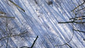 View from height to woman in warm clothes strolls along a path among the beautiful winter snow-covered landscape. Clear stock footage