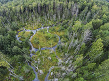 The view from the heights in the creeks and swamp in the forest. Aerial view. Swamp and streams in the dense forest of the Tver region Stock Images
