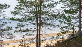 View from the high bank through the pines of the Gulf of Riga in Latvia royalty free stock photo