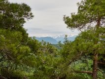 View of the high mountains with snowy peaks through the frame of pines. Spring mountains stock images
