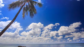 View of High Palm against White Clouds Motion Sea. Panorama of high palms against white cumulus clouds motion and azure sea stock video
