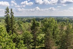 View from the high view tower to the green nature of Latvia. Separate trees in the foreground, next to the woodland with the countryside and on the horizon royalty free stock images