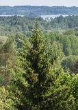 View from the high view tower to the green nature of Latvia. Separate trees in the foreground, next to the woodland with the countryside and on the horizon stock photos