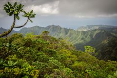 Lush jungle mountains of Hawaii Royalty Free Stock Photography
