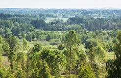 View from the high view tower to the green nature. Of Latvia - separate trees in the foreground, next to the woodland with the countryside and on the horizon royalty free stock photos
