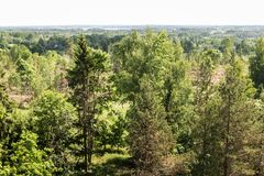 View from the high view tower to the green nature of Latvia. Separate trees in the foreground, next to the woodland with the countryside and on the horizon royalty free stock photography