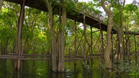 View of high wooden bridge over the lake and forest. Cambodia Royalty Free Stock Photography