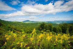 View from Highway 181, in Pisgah National Forest, North Carolina Royalty Free Stock Photos