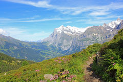 View from hiking path at the Grindelwald valley with mountains in Switzerland. View from hiking path at the Grindelwald valley with the mountains in Switzerland Stock Image