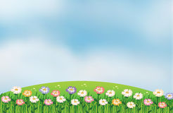 A view of the hill with flowers Royalty Free Stock Photo