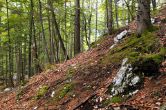The view on the hill in the green mountains forest. Stock Photos